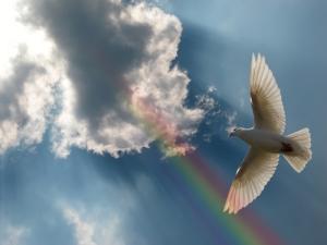 religion-dove